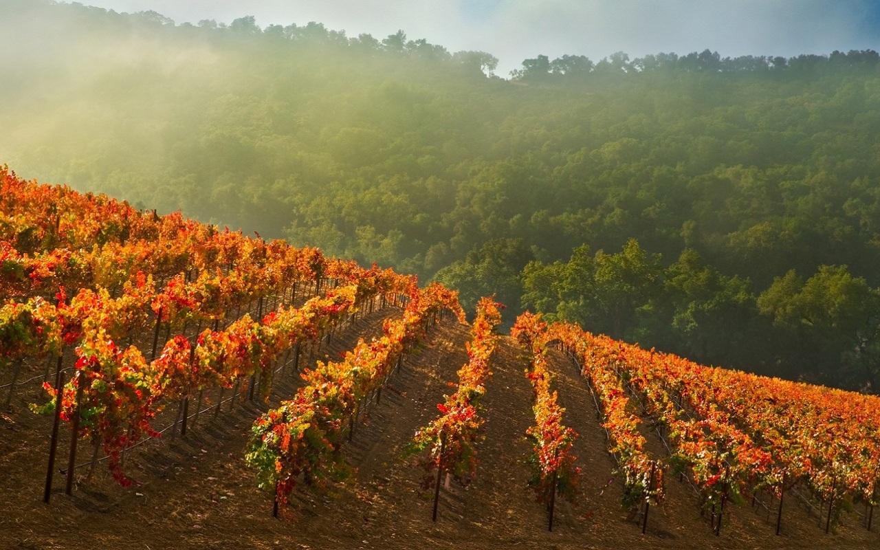 Wineline vinoteka